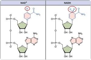 NAD+ metanolic